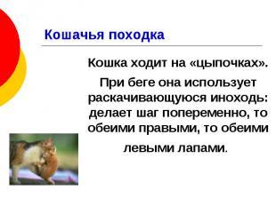 Кошачья походка Кошка ходит на «цыпочках». При беге она использует раскачивающую