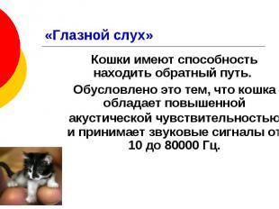 «Глазной слух» Кошки имеют способность находить обратный путь. Обусловлено это т