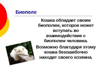 Биополе Кошка обладает своим биополем, которое может вступать во взаимодействие