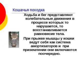 Кошачья походка Ходьба и бег представляют колебательные движения в процессе кото