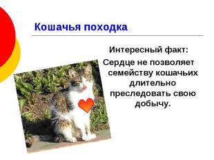 Кошачья походка Интересный факт: Сердце не позволяет семейству кошачьих длительн
