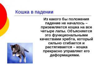 Кошка в падении Из какого бы положения падение не началось – приземляется кошка