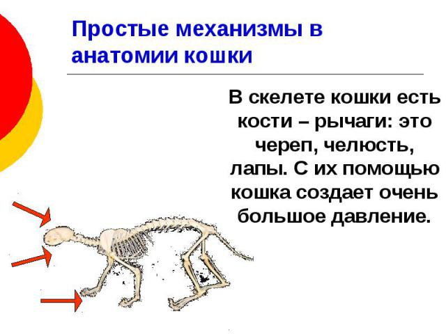 Простые механизмы в анатомии кошки В скелете кошки есть кости – рычаги: это череп, челюсть, лапы. С их помощью кошка создает очень большое давление.