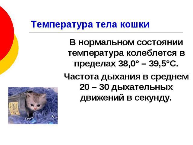 Температура тела кошки В нормальном состоянии температура колеблется в пределах 38,0° – 39,5°С. Частота дыхания в среднем 20 – 30 дыхательных движений в секунду.
