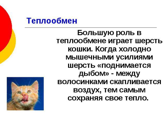 Теплообмен Большую роль в теплообмене играет шерсть кошки. Когда холодно мышечными усилиями шерсть «поднимается дыбом» - между волосинками скапливается воздух, тем самым сохраняя свое тепло.