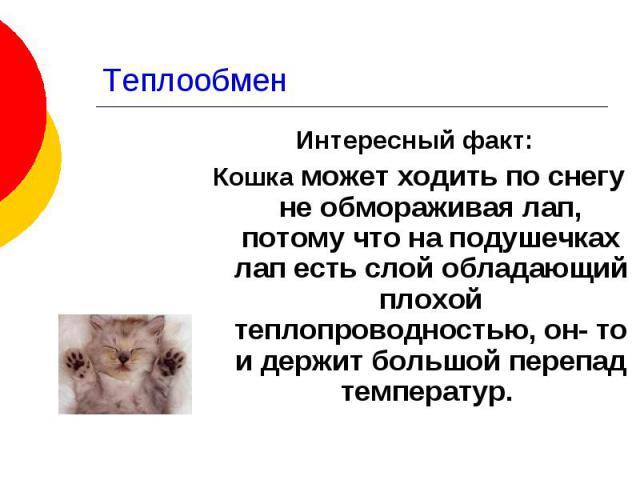 Теплообмен Интересный факт: Кошка может ходить по снегу не обмораживая лап, потому что на подушечках лап есть слой обладающий плохой теплопроводностью, он- то и держит большой перепад температур.
