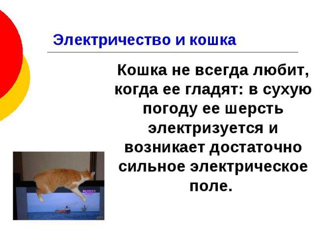 Электричество и кошка Кошка не всегда любит, когда ее гладят: в сухую погоду ее шерсть электризуется и возникает достаточно сильное электрическое поле.
