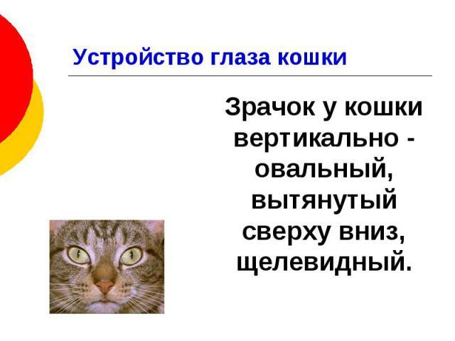Устройство глаза кошки Зрачок у кошки вертикально - овальный, вытянутый сверху вниз, щелевидный.