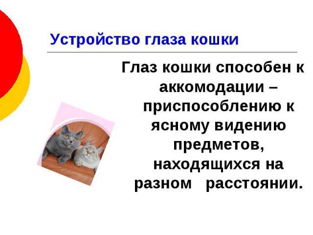 Устройство глаза кошки Глаз кошки способен к аккомодации – приспособлению к ясному видению предметов, находящихся на разном расстоянии.