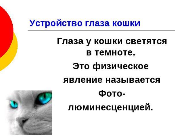 Устройство глаза кошки Глаза у кошки светятся в темноте. Это физическое явление называется Фото- люминесценцией.