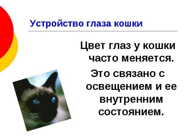 Устройство глаза кошки Цвет глаз у кошки часто меняется. Это связано с освещением и ее внутренним состоянием.