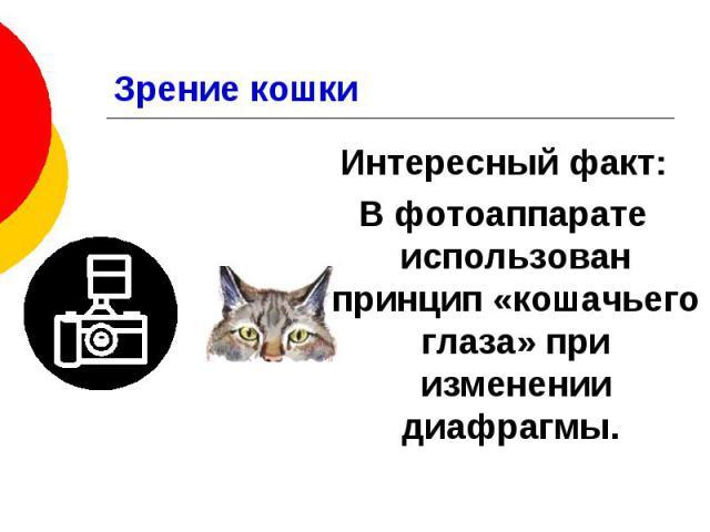 Зрение кошки Интересный факт: В фотоаппарате использован принцип «кошачьего глаза» при изменении диафрагмы.