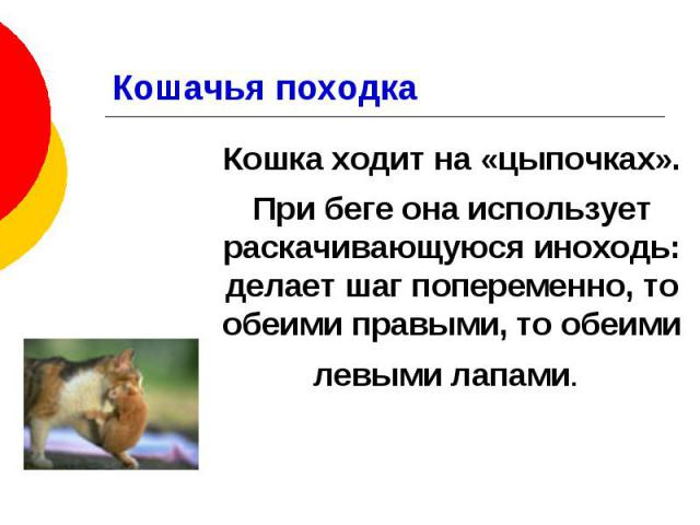 Кошачья походка Кошка ходит на «цыпочках». При беге она использует раскачивающуюся иноходь: делает шаг попеременно, то обеими правыми, то обеими левыми лапами.