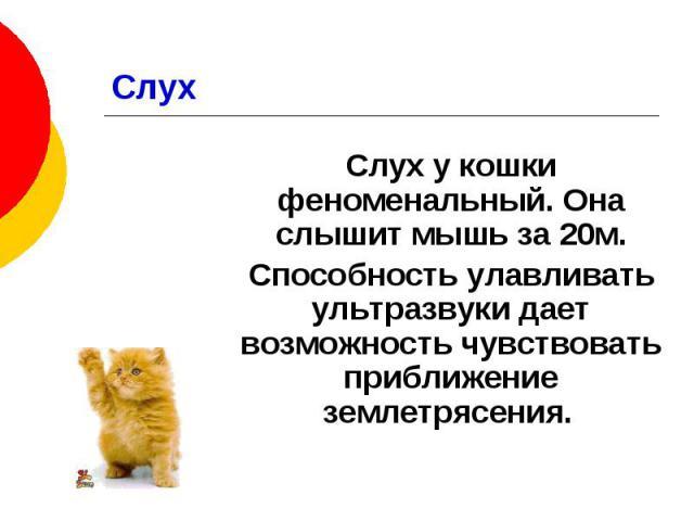 Слух Слух у кошки феноменальный. Она слышит мышь за 20м. Способность улавливать ультразвуки дает возможность чувствовать приближение землетрясения.