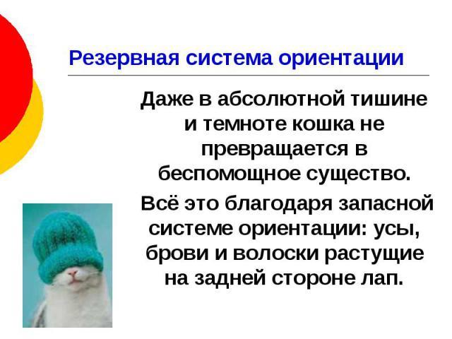 Резервная система ориентации Даже в абсолютной тишине и темноте кошка не превращается в беспомощное существо. Всё это благодаря запасной системе ориентации: усы, брови и волоски растущие на задней стороне лап.