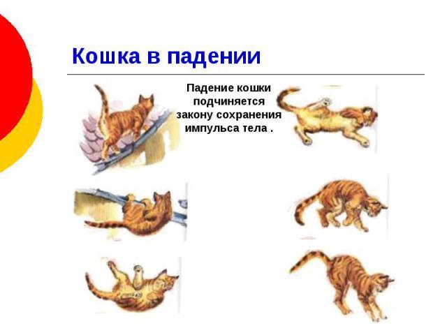Кошка в падении