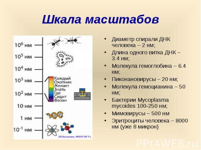 Шкала масштабов Диаметр спирали ДНК человека – 2 нм; Длина одного витка ДНК – 3.4 нм; Молекула гемоглобина – 6.4 нм; Пиконановирусы – 20 нм; Молекула гемоцианина – 50 нм; Бактерии Mycoplasma mycoides 100-250 нм; Мимовирусы – 500 нм Эритроциты челове…