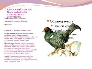 КАВКАЗСКИЙ ТЕТЕРЕВ Lirurus mlokosiewviczi ПОЗВОНОЧНЫЕ – VERTEBRATA Отряд: Курооб