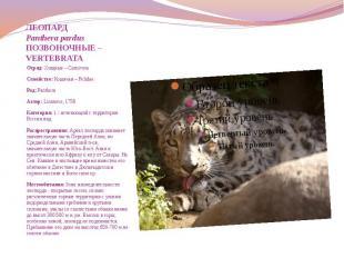 ЛЕОПАРД Panthera pardus ПОЗВОНОЧНЫЕ – VERTEBRATA Отряд: Хищные – Carnivora Семей