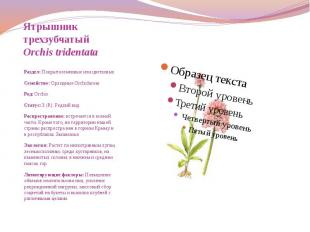Ятрышник трехзубчатый Orchis tridentata  Раздел: П