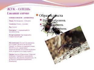 ЖУК - ОЛЕНЬ Lucanus cervus ЧЛЕНИСТОНОГИЕ – ARTHROPODA Отряд: Жесткокрылые – Cole