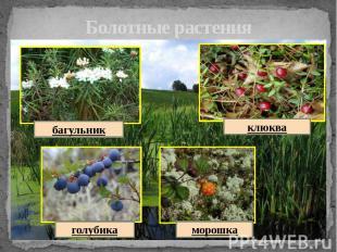 Болотные растения