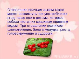 Отравление волчьим лыком также может возникнуть при употреблении ягод, чаще всег