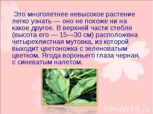 Это многолетнее невысокое растение легко узнать — оно не похоже ни на какое друг