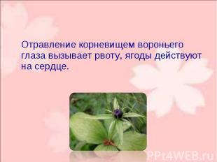 Отравление корневищем вороньего глаза вызывает рвоту, ягоды действуют на сердце.