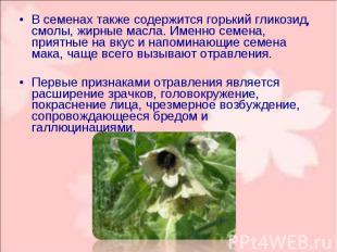 В семенах также содержится горький гликозид, смолы, жирные масла. Именно семена,