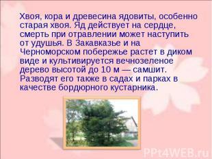 Хвоя, кора и древесина ядовиты, особенно старая хвоя. Яд действует на сердце, см