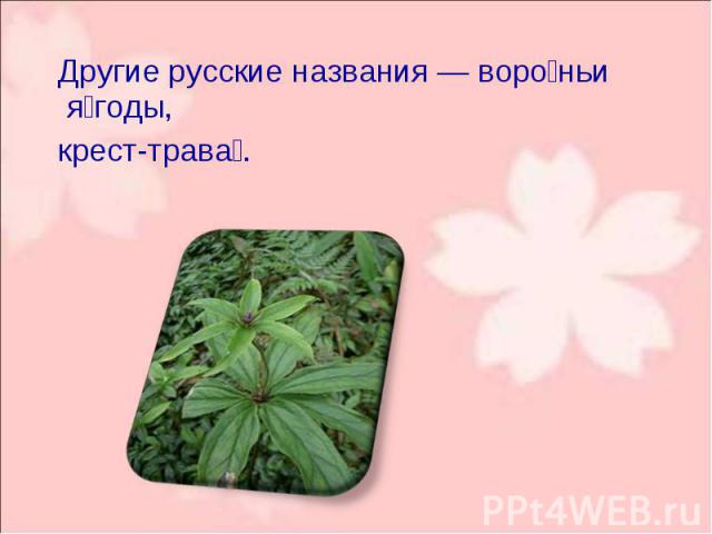Другие русские названия— воро ньи я годы, Другие русские названия— воро ньи я годы, крест-трава .