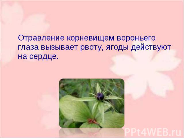 Отравление корневищем вороньего глаза вызывает рвоту, ягоды действуют на сердце. Отравление корневищем вороньего глаза вызывает рвоту, ягоды действуют на сердце.
