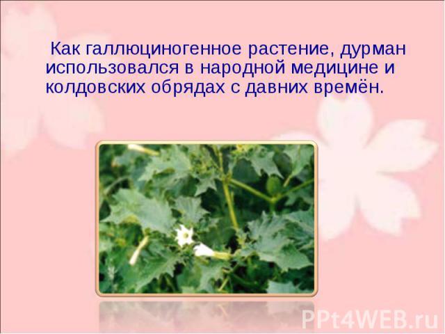 Как галлюциногенное растение, дурман использовался в народной медицине и колдовских обрядах с давних времён. Как галлюциногенное растение, дурман использовался в народной медицине и колдовских обрядах с давних времён.
