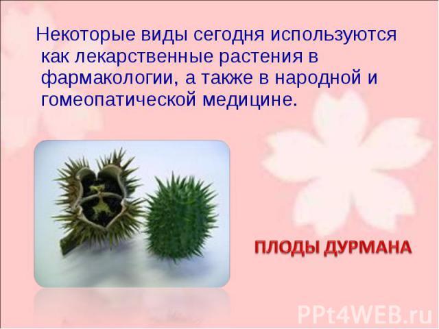 Некоторые виды сегодня используются как лекарственные растения в фармакологии, а также в народной и гомеопатической медицине. Некоторые виды сегодня используются как лекарственные растения в фармакологии, а также в народной и гомеопатической медицине.