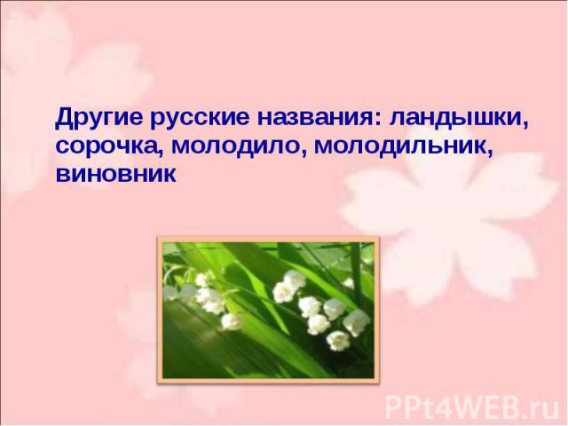 Другие русские названия: ландышки, сорочка, молодило, молодильник, виновник Другие русские названия: ландышки, сорочка, молодило, молодильник, виновник