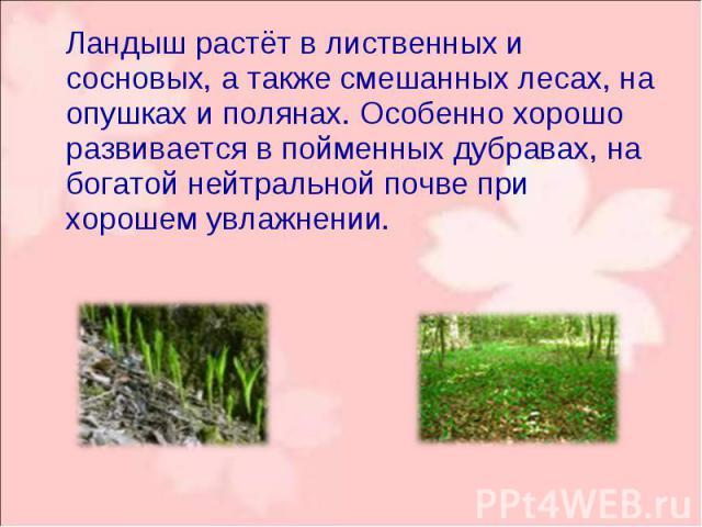 Ландыш растёт в лиственных и сосновых, а также смешанных лесах, на опушках и полянах. Особенно хорошо развивается в пойменных дубравах, на богатой нейтральной почве при хорошем увлажнении. Ландыш растёт в лиственных и сосновых, а также смешанных лес…
