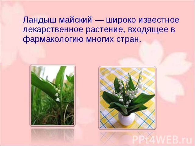 Ландыш майский— широко известное лекарственное растение, входящее в фармакологию многих стран. Ландыш майский— широко известное лекарственное растение, входящее в фармакологию многих стран.