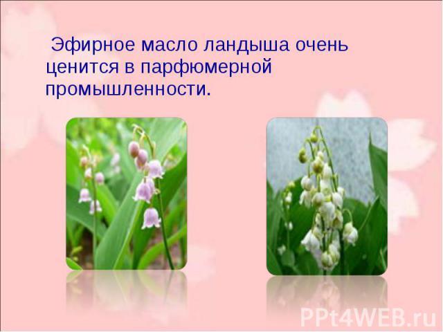 Эфирное масло ландыша очень ценится в парфюмерной промышленности. Эфирное масло ландыша очень ценится в парфюмерной промышленности.