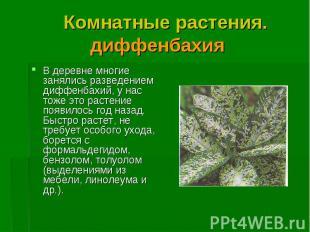 В деревне многие занялись разведением диффенбахий, у нас тоже это растение появи