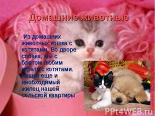 Из домашних животных кошка с котятами. Во дворе собака, мы с братом любим играть