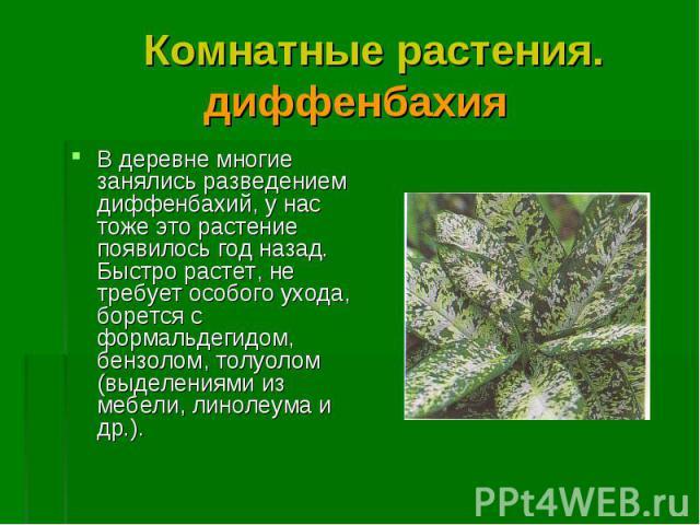 В деревне многие занялись разведением диффенбахий, у нас тоже это растение появилось год назад. Быстро растет, не требует особого ухода, борется с формальдегидом, бензолом, толуолом (выделениями из мебели, линолеума и др.). В деревне многие занялись…