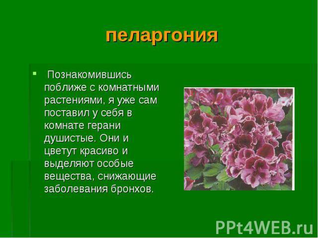 Познакомившись поближе с комнатными растениями, я уже сам поставил у себя в комнате герани душистые. Они и цветут красиво и выделяют особые вещества, снижающие заболевания бронхов. Познакомившись поближе с комнатными растениями, я уже сам поставил у…