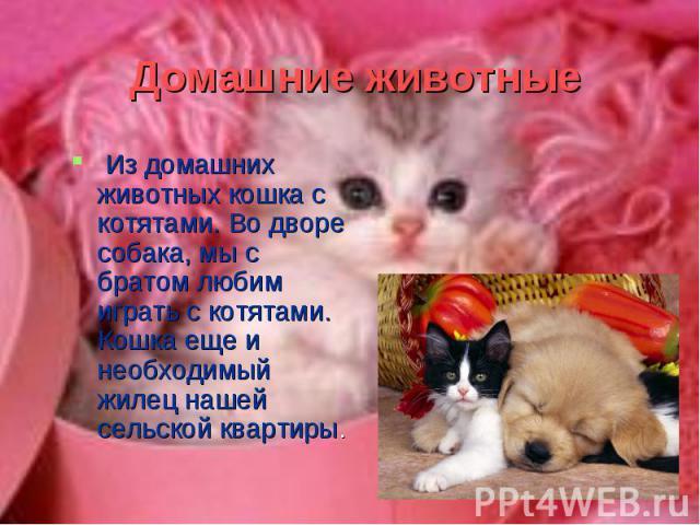 Из домашних животных кошка с котятами. Во дворе собака, мы с братом любим играть с котятами. Кошка еще и необходимый жилец нашей сельской квартиры. Из домашних животных кошка с котятами. Во дворе собака, мы с братом любим играть с котятами. Кошка ещ…