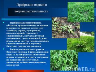 Прибрежная растительность обильная, представлена несколькими видами осок (вздута