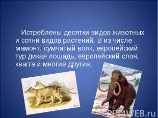 Истреблены десятки видов животных и сотни видов растений. В из числе мамонт, сум