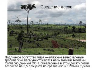Сведение лесов