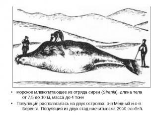 морское млекопитающее из отряда сирен (Sirenia), длина тела от 7,5 до 10 м, масс