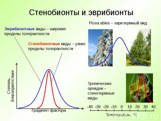 Стенобионты и эврибионты