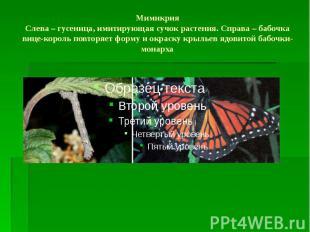Мимикрия Слева – гусеница, имитирующая сучок растения. Справа – бабочка вице-кор